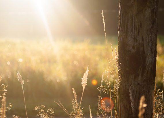 Sonne für ein starkes Immunsystem